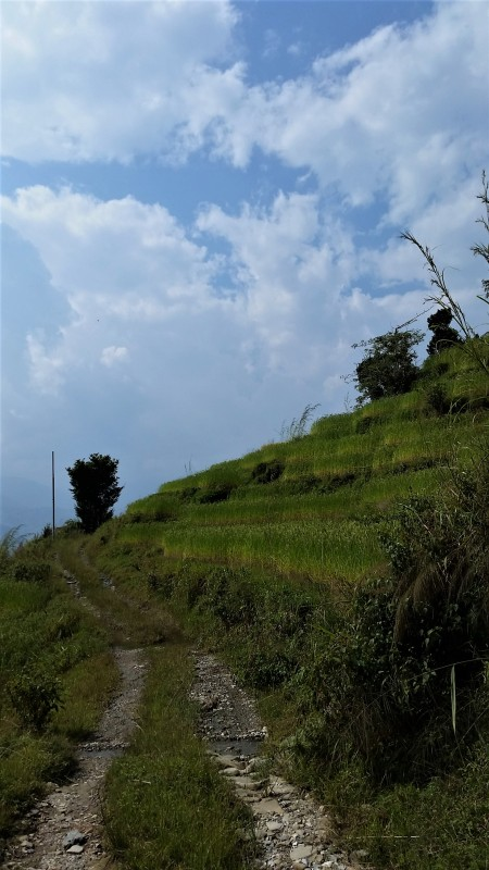 Hillside Path Pokhara