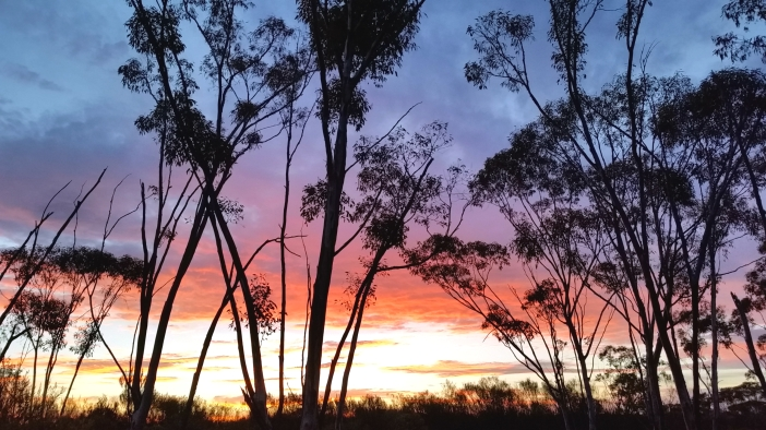 Poustinia Treetop Sunset