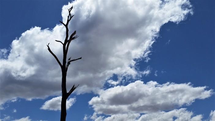 Tree Spire